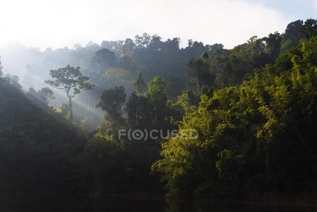 Exuberante floresta profunda durante o dia — Fotografia de Stock
