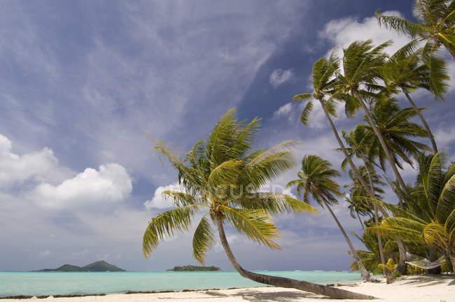 Vista do oceano em Bora-Bora e palmeiras — Fotografia de Stock