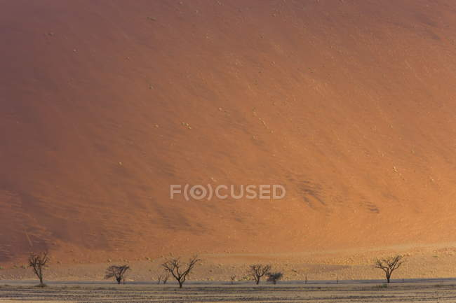 Parc du Namib naukluft — Photo de stock