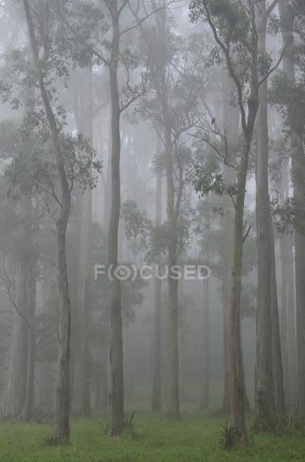 Forêt de sorbier dans le brouillard — Photo de stock