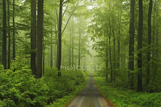 Weg durch Buchenwald — Stockfoto