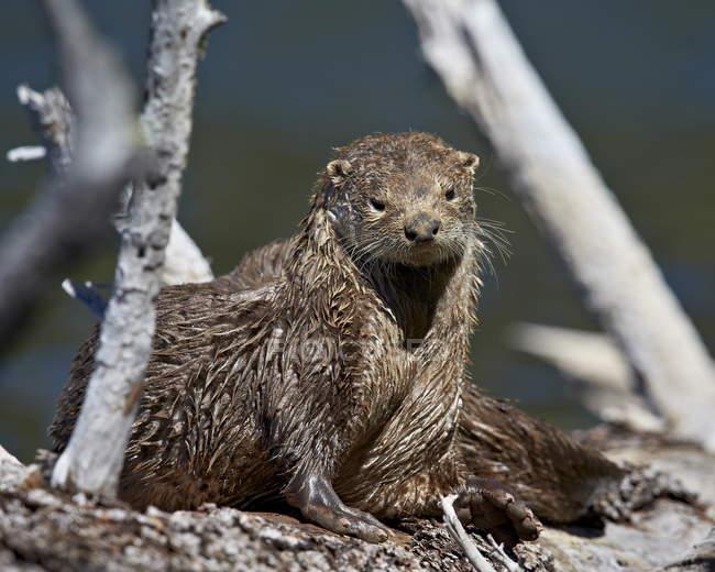 Мокрий річка Otter — стокове фото