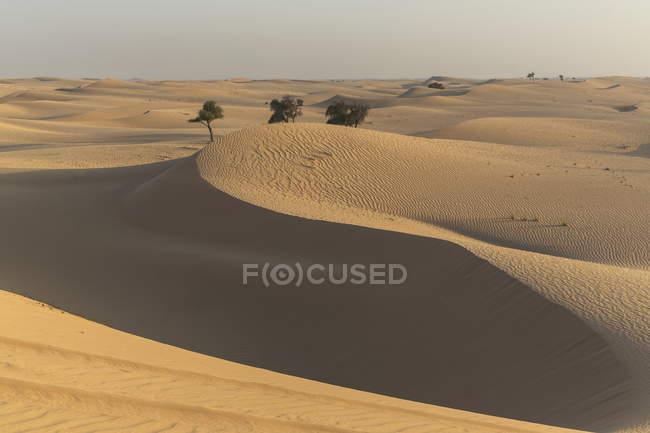 No deserto perto de Liwa em Abu Dhabi — Fotografia de Stock