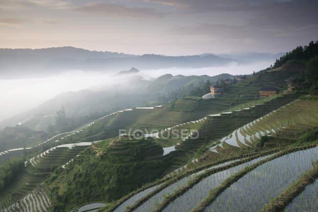 Схід сонця на Longsheng терасові ricefields — стокове фото
