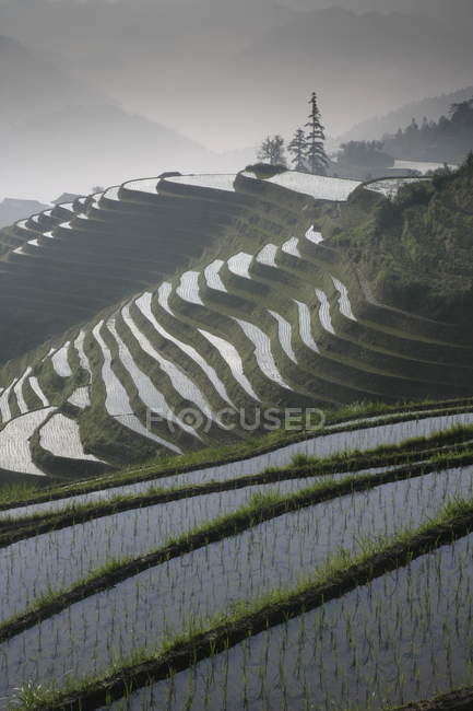 Aerial view of Longsheng terraced ricefields — Stock Photo