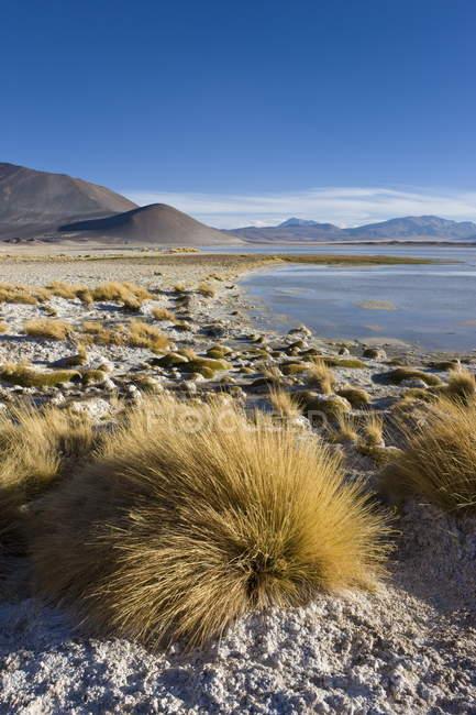 Salz-See Laguna de Tuyajto — Stockfoto
