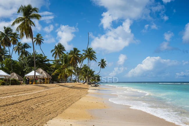 Sandy beach and palm trees — Stock Photo