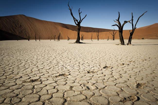 Pegadas no lodaçal secas — Fotografia de Stock