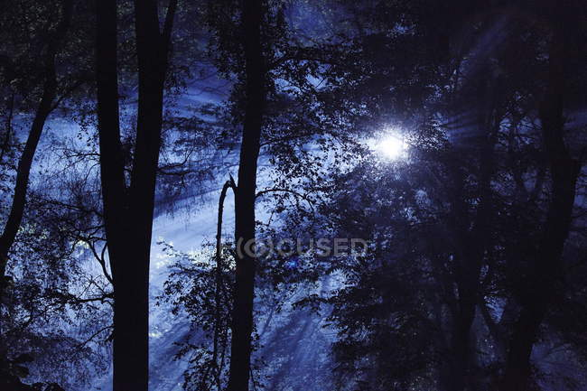 Eerie woods and English countryside at night — Stock Photo