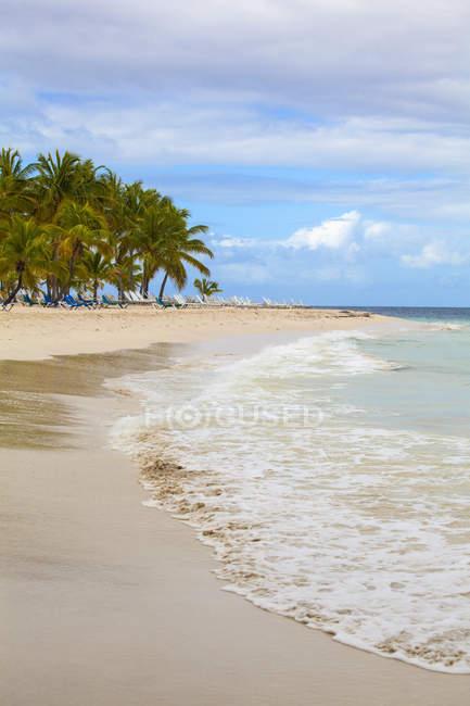 Praia com palmeiras — Fotografia de Stock