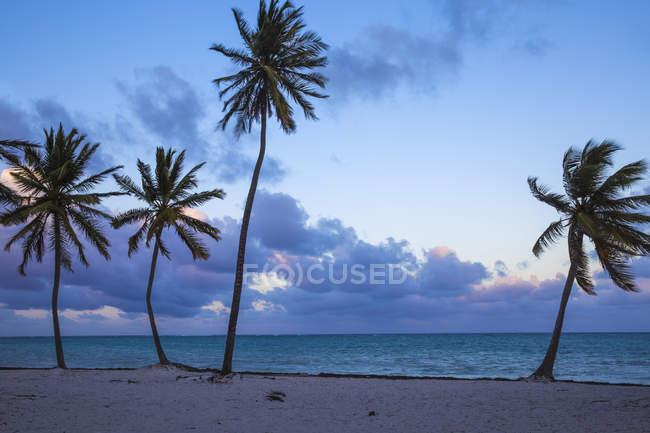 Вид на пляжі Кана Cap в Пунта Кана — стокове фото