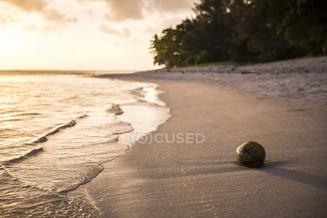 Noce di cocco su una spiaggia tropicale al tramonto — Foto stock