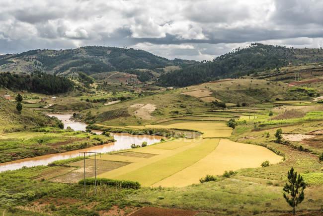 Rice paddy field scenery near Antananarivo — Stock Photo