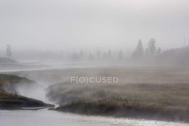 Am frühen Morgennebel Madison River — Stockfoto