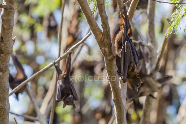 Camp de vol rouge vipère — Photo de stock