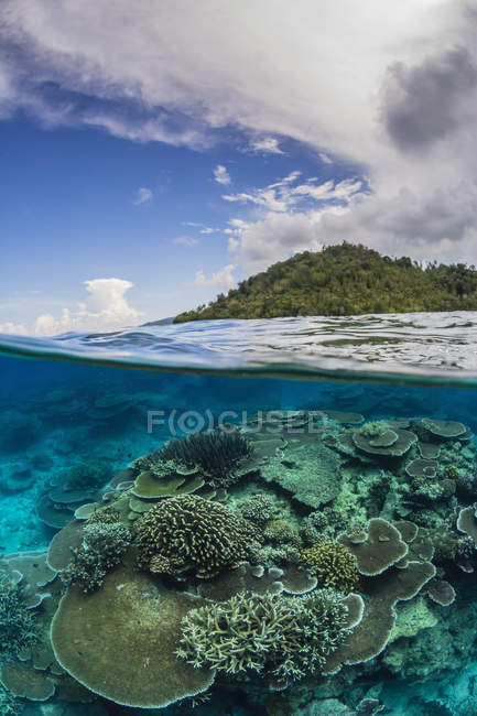 Coral Reef auf Pulau Setaih Island — Stockfoto