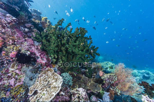 Corales en Tengah Kecil Island - foto de stock