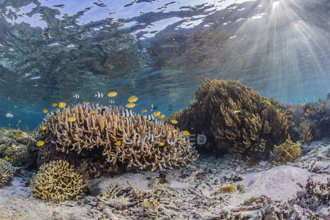 Corales en la isla de Sebayur - foto de stock