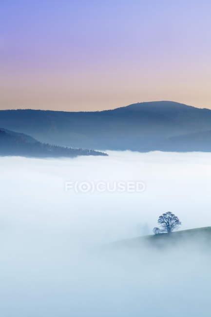 Einzigen Baum in einer nebligen Landschaft — Stockfoto