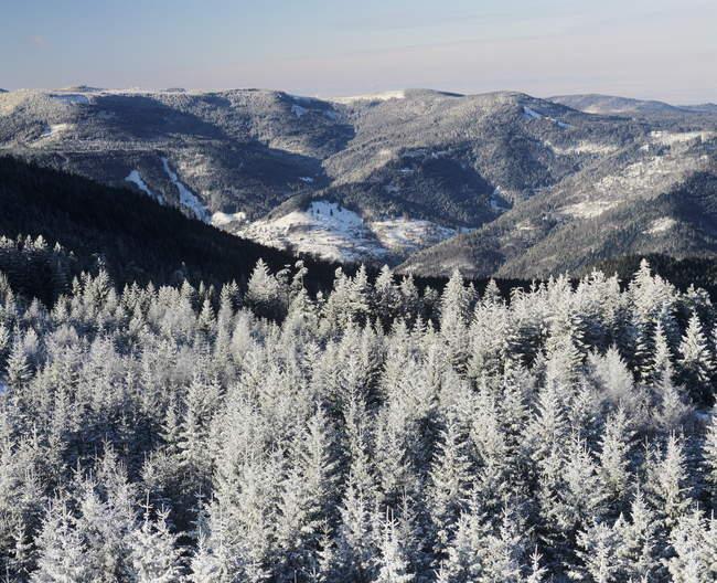 A Floresta Negra do norte — Fotografia de Stock