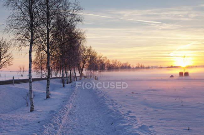 Naturschutzgebiet bei Sonnenuntergang im winter — Stockfoto
