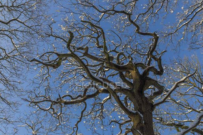 Nevado árvores sob o céu azul — Fotografia de Stock