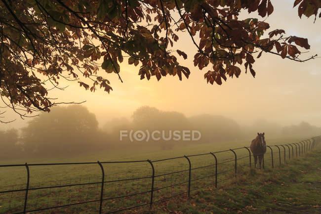 Fernen Pferd im Feld bei Sonnenaufgang — Stockfoto