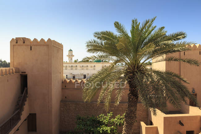 Ramparts, palm tree and view to mosque — Stock Photo