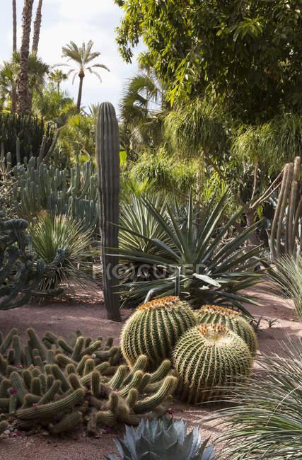 Ansicht des Jardin Majorelle — Stockfoto