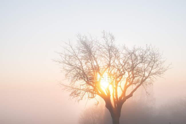 Baum, Nebel und morgen Sonne — Stockfoto