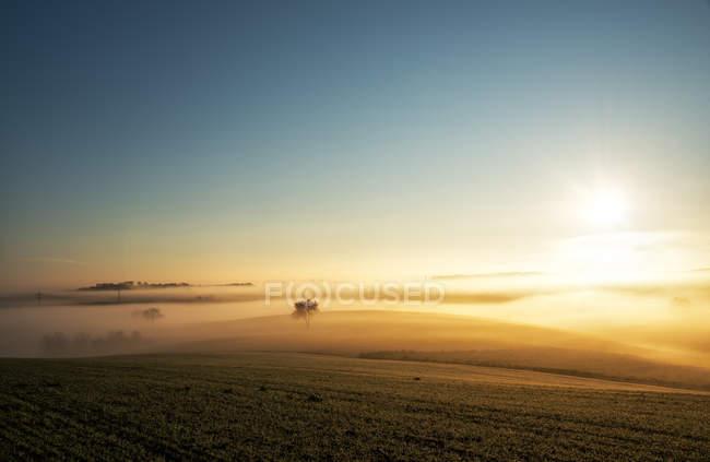 Einzigen Baum im Nebel — Stockfoto