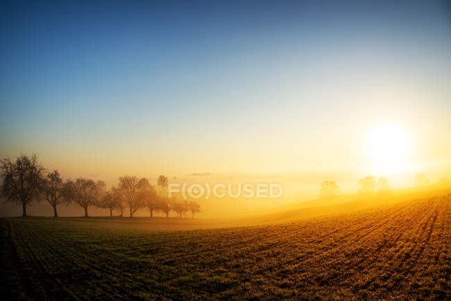 Warm morning fog — Stock Photo