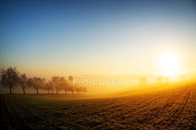 Теплый утренний туман — стоковое фото
