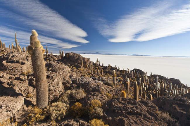 Salar de Uyuni deserto sale piatto — Foto stock