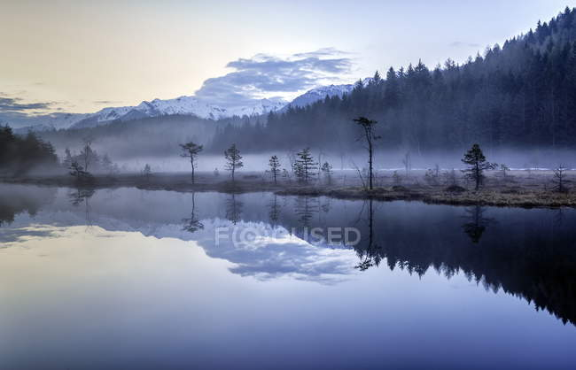 Brouillard masquant la végétation dans la réserve naturelle — Photo de stock