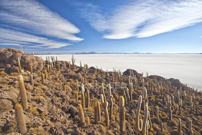 View from top of Isla Incahuasi — Stock Photo