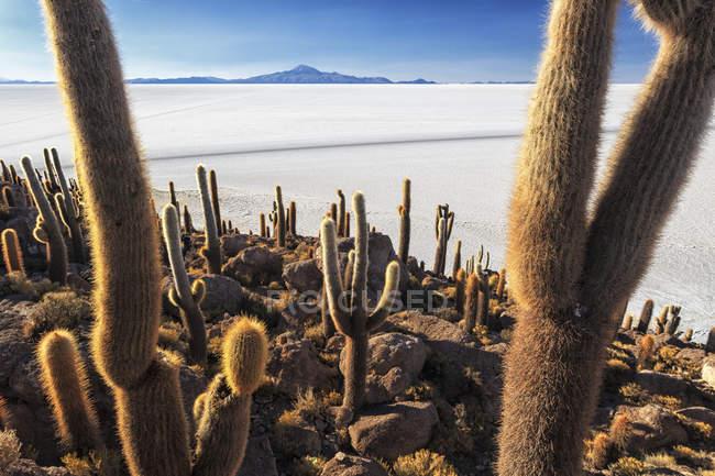 Outcrop in middle of Salar de Uyuni — Stock Photo