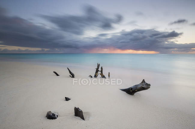 Caribbean sunset and tree trunks on Ffryes Beach — Stock Photo