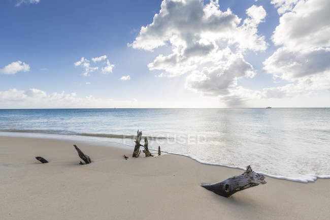 Tree trunks on beach with Caribbean Sea — Stock Photo