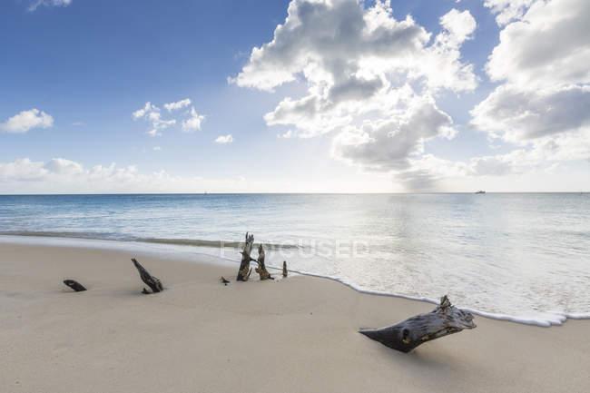 Baumstämme mit karibischen Meer am Strand — Stockfoto