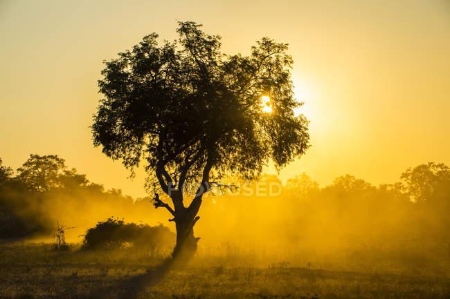 Poeira no luminoso ao pôr do sol — Fotografia de Stock