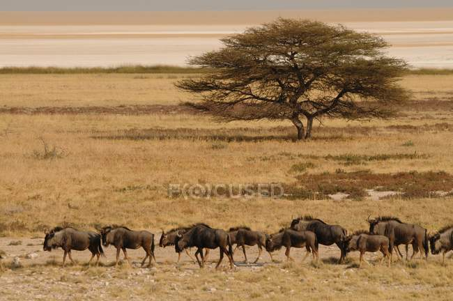 View of group of antelopes — Stock Photo