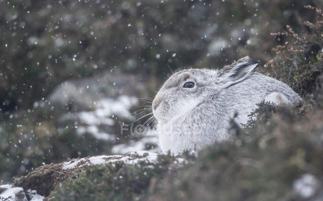 Вид горы заяц — стоковое фото