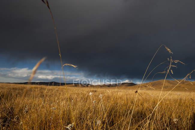 Грозовое небо над пастбищных угодий — стоковое фото