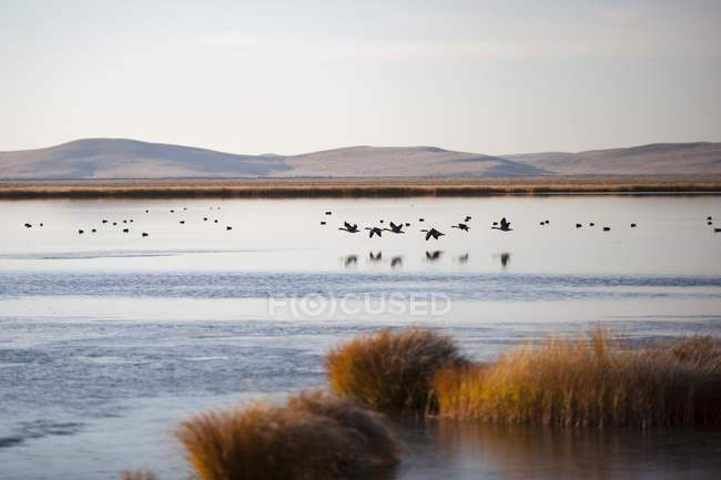 Huahu, fiore lago — Foto stock
