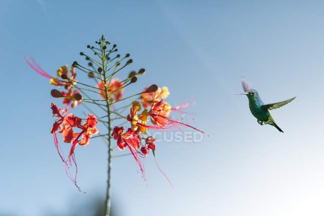 Hummingbird in Castara Bay — Stock Photo