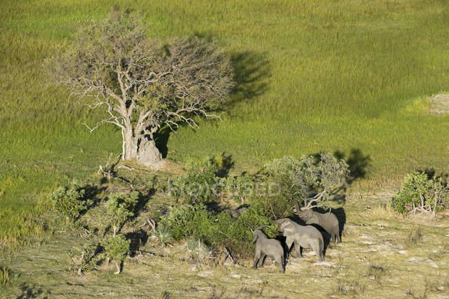 Vista aérea de elefantes africanos — Fotografia de Stock