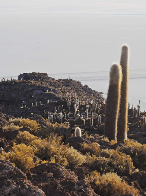 Vista dell'isola di Incahuasi con giganteschi cactus — Foto stock