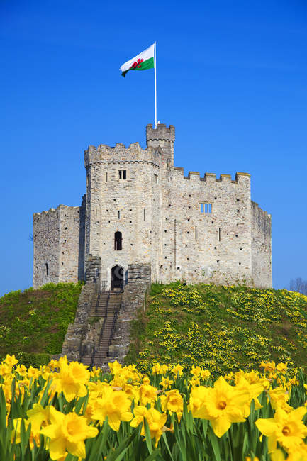 Norman Keep e narcisi, Castello di Cardiff — Foto stock