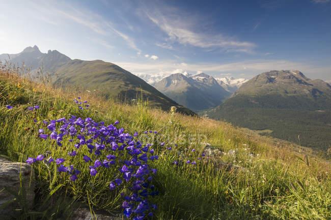 Fleurs et prairies verdoyantes — Photo de stock